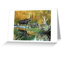 Maine Moose Greeting Card