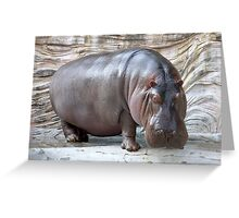 Random Hippopotamus Greeting Card