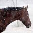 Danny's First Snow by GrayHorseDesign