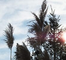 Horsetails with sun by Roger-Cyndy