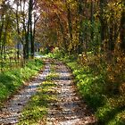 Autumnwood Lane by wiscbackroadz