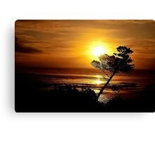 LEANING TREE SILHOUETTE Canvas Print