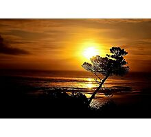 LEANING TREE SILHOUETTE Photographic Print
