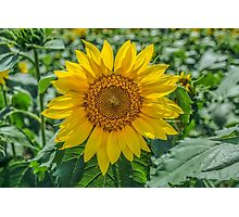 Summer Delight Photographic Print