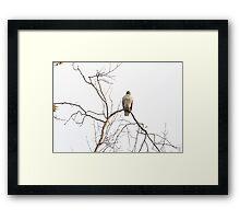 Pride of a Hawk - Eaton Canyon Park, CA Framed Print