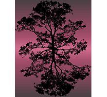 Lavender Horizons Photographic Print