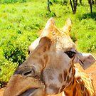 Giraffe portrait in Nairobi National Park - Kenya, Africa by Atanas NASKO