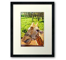 Giraffe portrait in Nairobi National Park - Kenya, Africa Framed Print