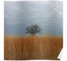 Surviving Tree in Golden Field Poster