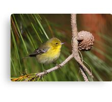 Pine Warbler Canvas Print
