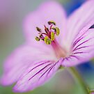 Sticky Geranium  by Nicole  Markmann Nelson