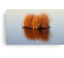 Reflected Grass Canvas Print