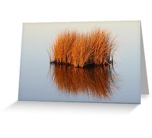 Reflected Grass Greeting Card