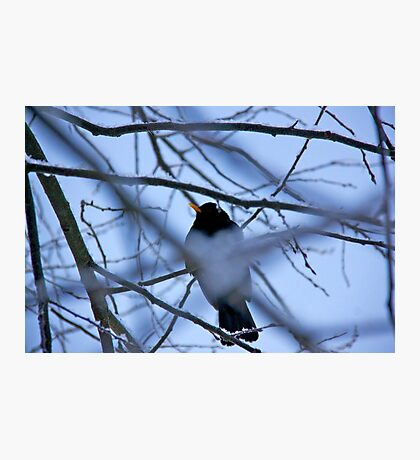 Take these broken wings and learn to fly Photographic Print