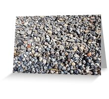 Seashore of shells and stones closeup Greeting Card