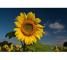 Sunflower Hello Photographic Print