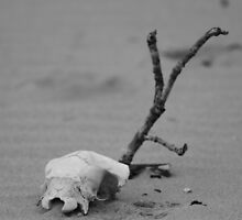 Freshwater West - Lonely Skull. (photo as found) by Mark Haynes Photography
