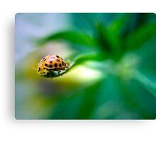 Living on the edge - ladybug on a leaf Canvas Print