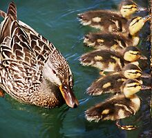 Getting Your Ducks In A Row.... by Laurie Minor