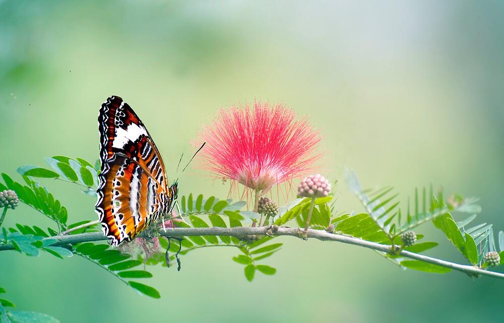 Sitting Pretty - butterfly  by Jenny Dean