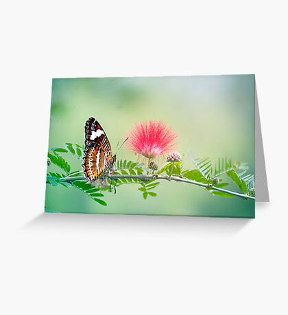 Sitting Pretty - butterfly  Greeting Card
