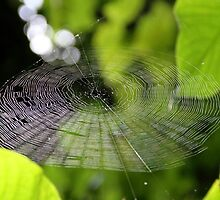 Spider Web by Alberto  DeJesus