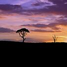 One Tree Hill by Jason Scott
