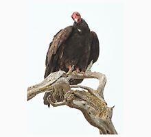 Curious Turkey Vulture Unisex T-Shirt