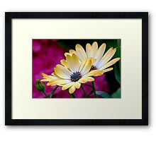 The beauty and the blurry Framed Print
