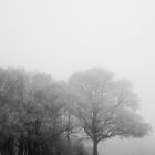 Herefordshire - Frozen Field (1) by PhotoBearUK