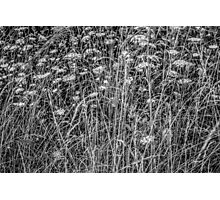 Lace Meadow Photographic Print