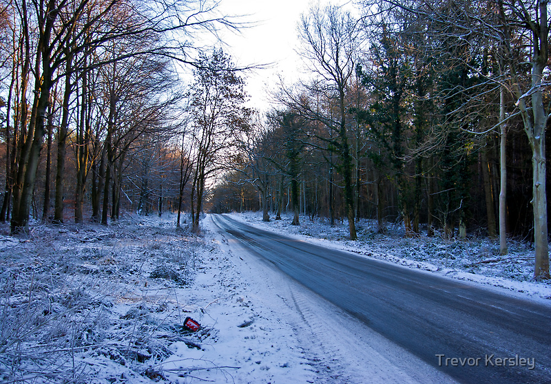 Road Through The Woods by Trevor Kersley