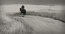 Horizon hunters by kurrawinya
