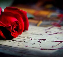 Love Is ... A Red Rose by Evita