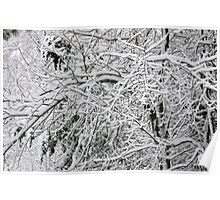 Snowy Trees Poster