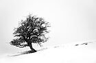 Snow Thorn by wildscape