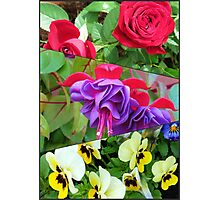 Roses, Fuchsias and Pansies Collage Photographic Print
