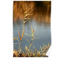 Canal grasses close up  Poster