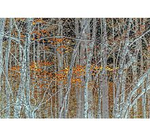 Sienna Forest Photographic Print