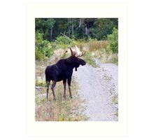 Bull Maine Moose Art Print
