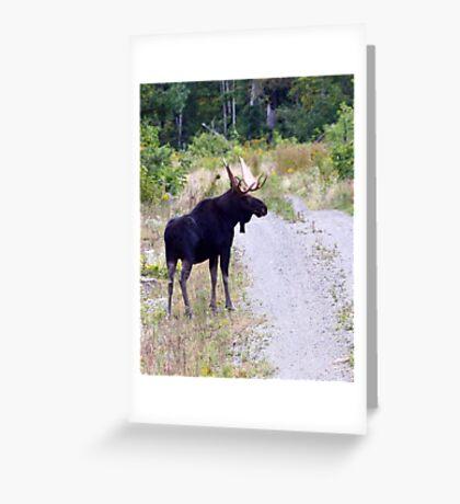 Bull Maine Moose Greeting Card