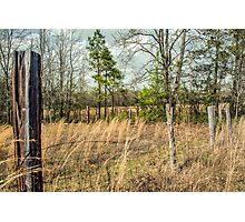 Meadow Pasturale Photographic Print