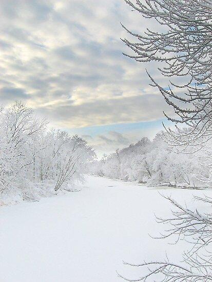 Winter wonder by Angela King-Jones