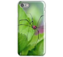 Daddy long legs iPhone Case/Skin