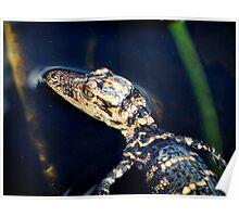 Little Alligator   Poster