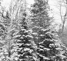 Snowdusted Woods by ackdaisy610