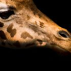 Giraffe  by photo-kia