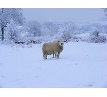 THE BEST COAT FOR WINTER Photographic Print