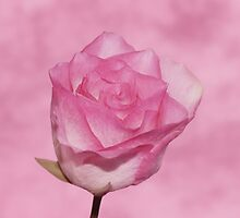 Pink Dreams by Sandy Keeton
