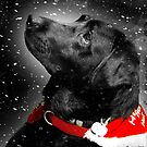 Happy Holiday Puppy  by Christopher Boscia